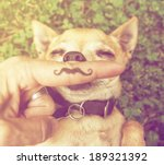 Stock photo a cute chihuahua with a mustache finger in front of him done with a retro vintage instagram filter 189321392
