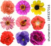 selection of various flowers... | Shutterstock . vector #189337316