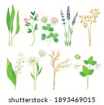 wild flowers and herbaceous... | Shutterstock .eps vector #1893469015