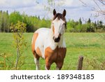 white horse with brown patches... | Shutterstock . vector #189348185