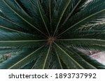 Beautiful Natural Green Palm...