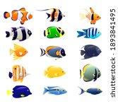 collection of ocean fish.... | Shutterstock . vector #1893841495