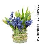 Grape Muscari Hyacinth And...