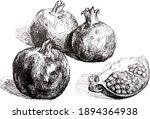 pomegranate. realistic line...   Shutterstock .eps vector #1894364938