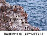 Bird Colony  Nesting Cormorants ...