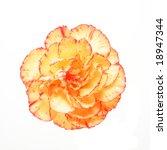Orange Carnation Flower