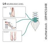 medical illustration to... | Shutterstock . vector #1894921648
