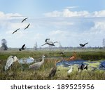 florida wetlands collage with... | Shutterstock . vector #189525956