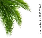 leaves of coconut tree isolated ... | Shutterstock . vector #189567962
