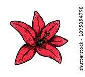 illustration of lily flower in... | Shutterstock .eps vector #1895854798