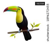 Keel Billed Toucan Isolated On...
