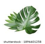 monstera leaf  tropical... | Shutterstock . vector #1896601258