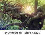 Distorted Branches Of