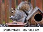 Squirrel Next To The Bird House ...
