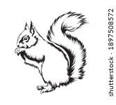 Squirrel Black And White Drawing