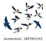 flying bird various view...   Shutterstock .eps vector #1897891192