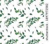 vector eucalyptus tree branches ... | Shutterstock .eps vector #1897972582