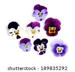 yellow iris   Shutterstock . vector #189835292