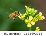 image of bee or honeybee on...   Shutterstock . vector #1898493718
