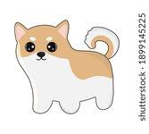 cute friendly shiba inu puppy ... | Shutterstock .eps vector #1899145225
