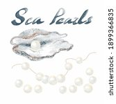 set of sea pearls. an open...   Shutterstock .eps vector #1899366835