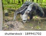 a giant anteater  myrmecophaga... | Shutterstock . vector #189941702