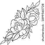 peony with leaves black line on ... | Shutterstock .eps vector #1899560728