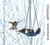 Bird Feeder In The Winter With...