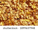 Fallen Leaves In Autumn From A...