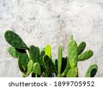 Green Cactus On Grunge Concrete ...