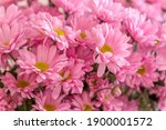 A Close Up Photo Of A Bunch Of...