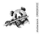 hand drawn sketch of panda...   Shutterstock .eps vector #1900281922