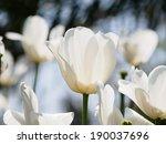 spring flowers series  white...   Shutterstock . vector #190037696