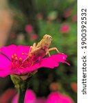 A Grasshopper Resting On A...