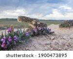 Closeup Of A Prairie Rattlesnake