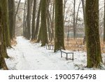 Winter Road Between Trees With...