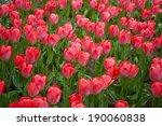 red tulips garden | Shutterstock . vector #190060838