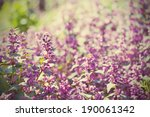 background from tender soft... | Shutterstock . vector #190061342