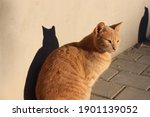 Ginger Tabby Cat And Its Shadow ...