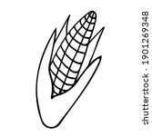 a cute hand drawn ear of ripe... | Shutterstock .eps vector #1901269348