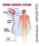 Human Peripheral Nervous System ...
