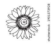 sunflower flower vector drawing ...   Shutterstock .eps vector #1901373928