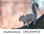 Close Up Of A Squirrel Standing ...