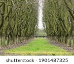 Bare Fruit Trees On Farm In The ...