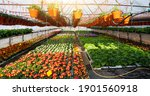 Greenhouses For Growing Flowers....