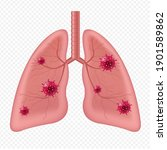 lungs human internal organ with ... | Shutterstock .eps vector #1901589862