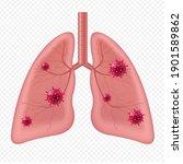 lungs human internal organ with ... | Shutterstock .eps vector #1901589862