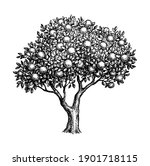 apple tree. ink sketch isolated ...   Shutterstock .eps vector #1901718115