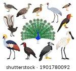 colored exotic bird set....   Shutterstock .eps vector #1901780092