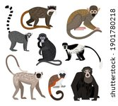 different monkey set. cartoon... | Shutterstock .eps vector #1901780218